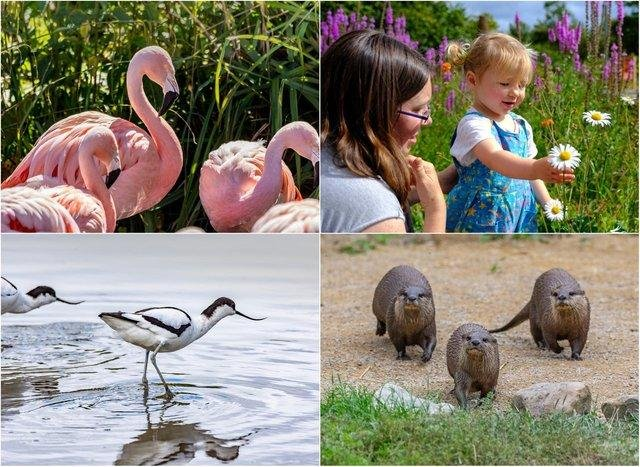 Washington Wetland Centre is open this half-term. Pictures from WWT.