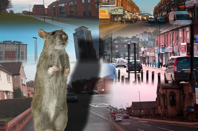 We look at the number of rodent reports across the different areas of Sunderland.