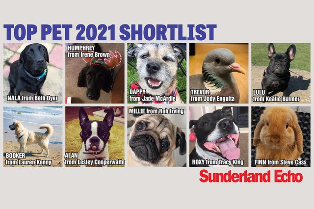 Who will get your vote to be crowned Sunderland's Top Pet?