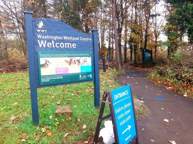 Washington Wetland Centre has reported encouraging numbers of visitors since reopening. JPI image.