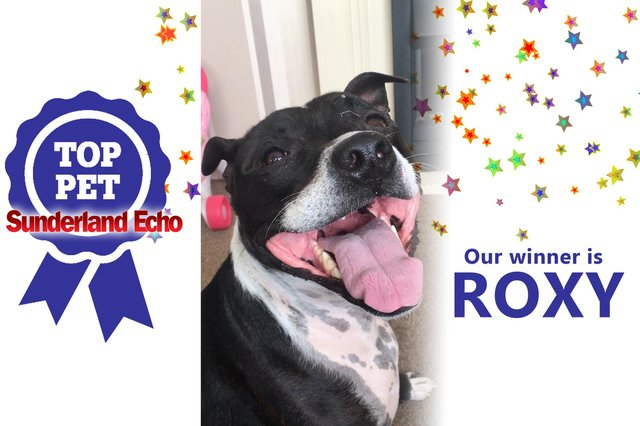 Roxy is our Top Pet competition winner!
