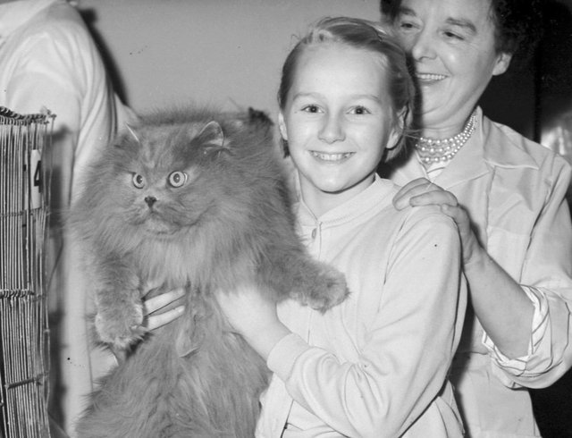 A cat show at the Palatine Hotel in November 1960.