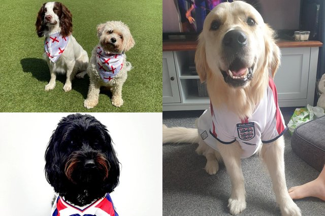 Creatures great and small show their support for England ahead of the quarter-finals this weekend.