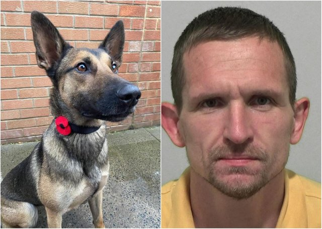 Paul Reay broke into a terraced house in Sunderland and made off with a bike, but Police Dog Roxy, a Belgian Malinois, had no problem tracking him down to a house in a nearby street.