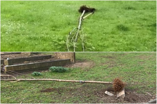 Sunderland City Council shared these photos of damaged trees in Southwick Cemetery.