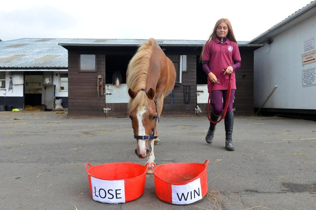 Yellow the psychic pony decided between two buckets.