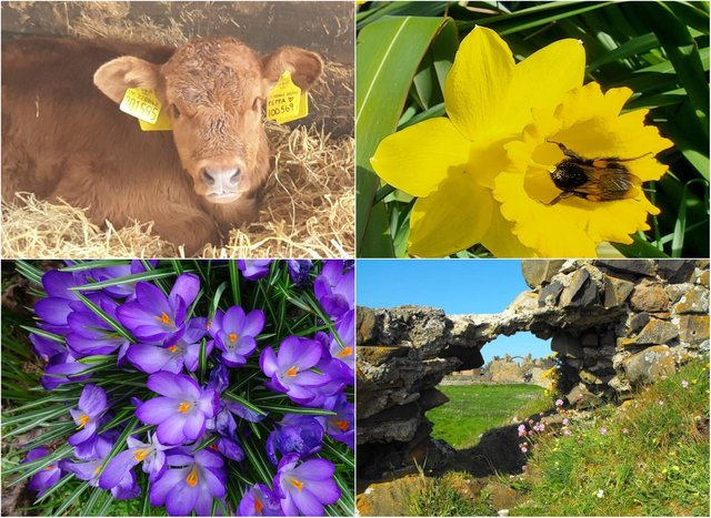 Your spring pictures have brightened up our week!