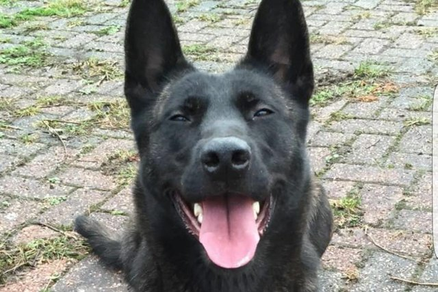 Several arrests were made as a result of this PD's dogged work.