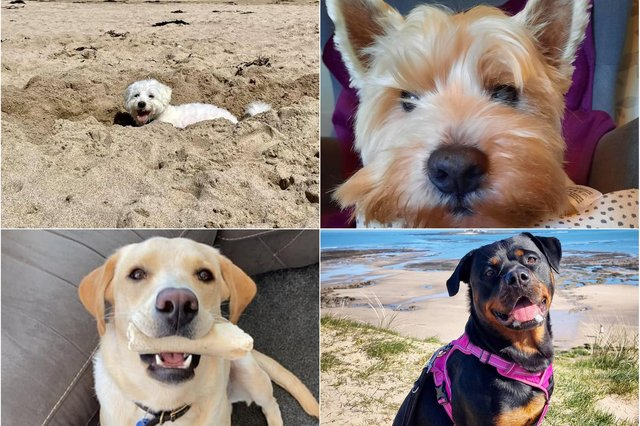Some of the dogs with the most popular names in the UK.
