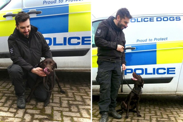 Rolo with his handler PC Dave Robinson.