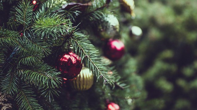 How to recycle your Christmas tree and where to take it in Sunderland