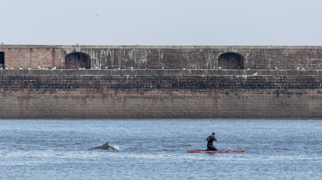 In another shot, Daz Martin snapped the moment a paddle boarder was close to one of the pod.