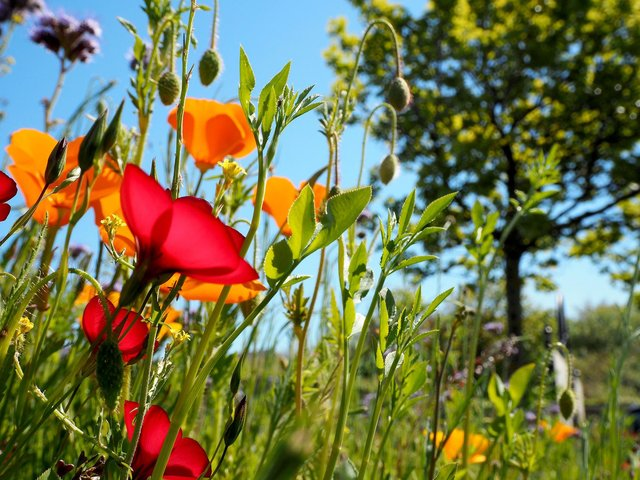 The proposals received unanimous support at a meeting of Sunderland City Council this week as part of a drive to improve biodiversity and local ecosystems.
