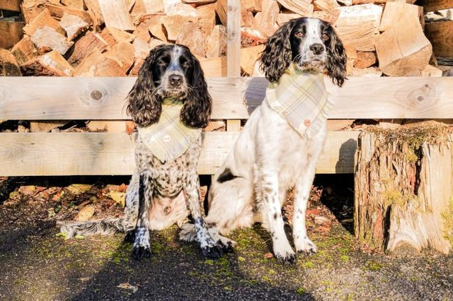 Willow and Bobby from Seaham were the winners in last year's Canine Critics competition